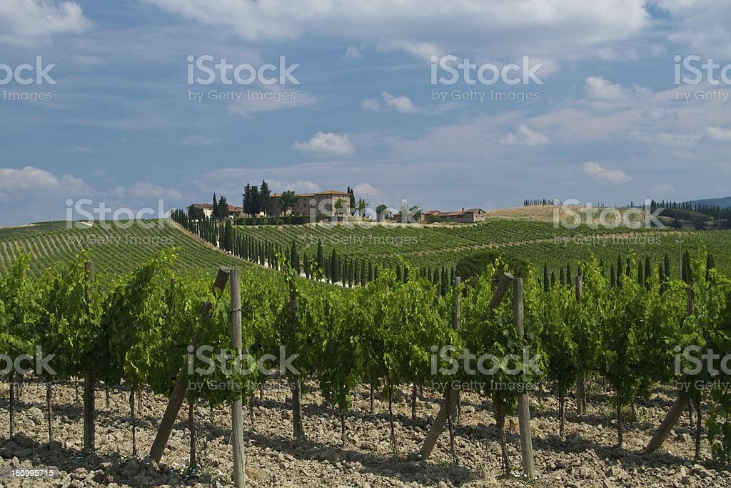 Tuscan Wine Farm stock photo