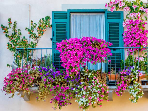 義大利托斯卡納和翁布裡亞地區 - 在開花 個照片及圖片檔