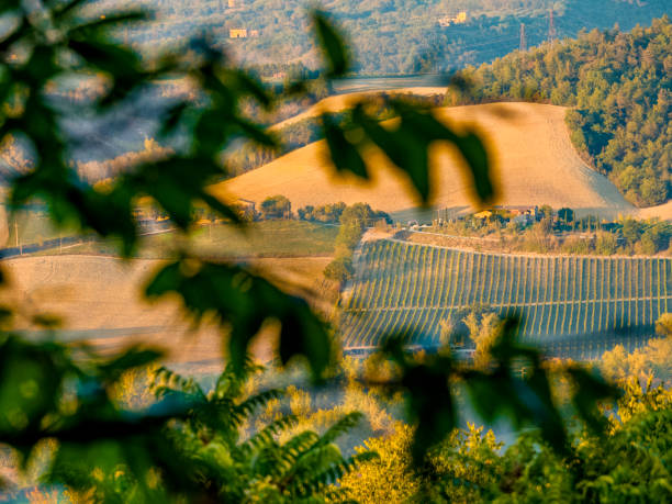 Tuscany and Umbria region of Italy Vineyard in the Umbrian countryside of Italy umbria stock pictures, royalty-free photos & images