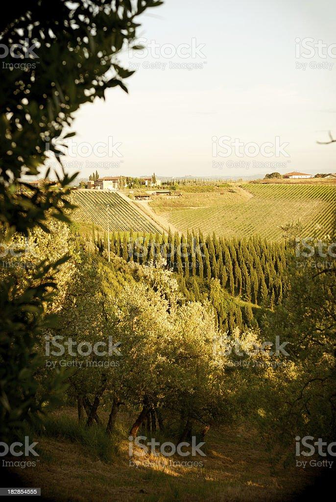 Tuscany chianti landscape - Italy vineyard royalty-free stock photo