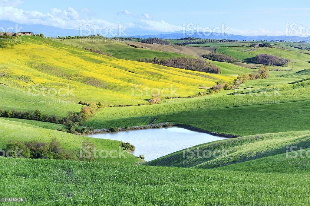 Tuscany, Crete Senesi rural landscape, Italy. Lake green yellow fields. stock photo