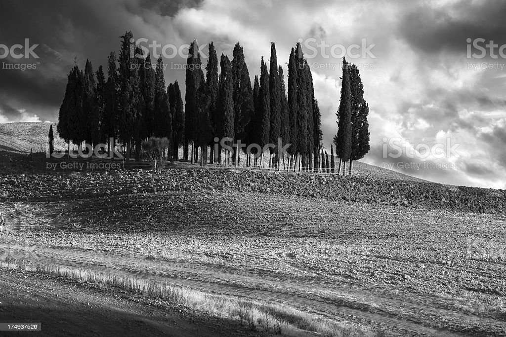 Tuscany cypress in black and white royalty-free stock photo