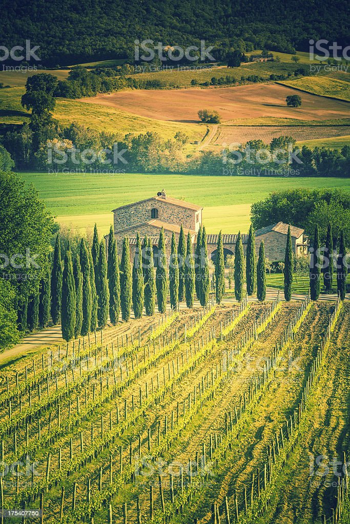 Tuscany Farmhouse and Vineyards, Chianti Region royalty-free stock photo