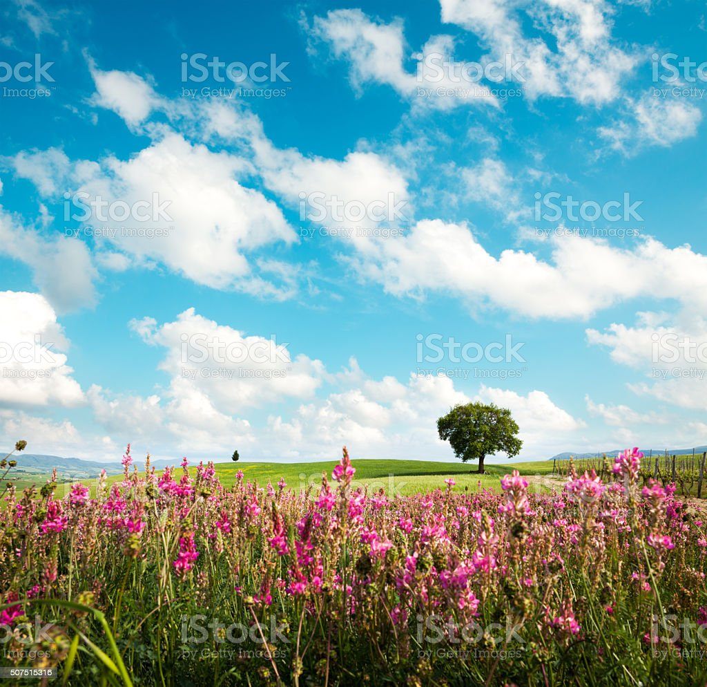 Tuscany Field In Spring stock photo