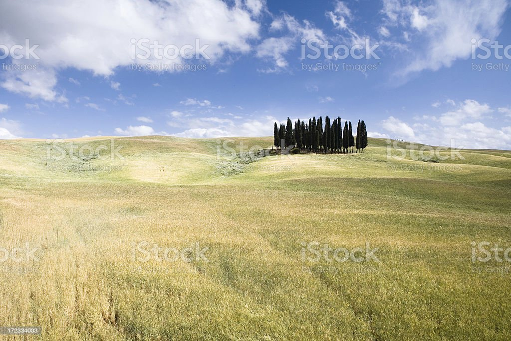 tuscany field royalty-free stock photo