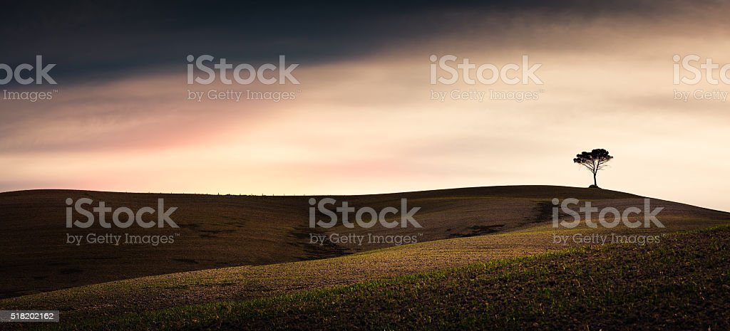 Tuscany Fields With Lonely Tree stock photo
