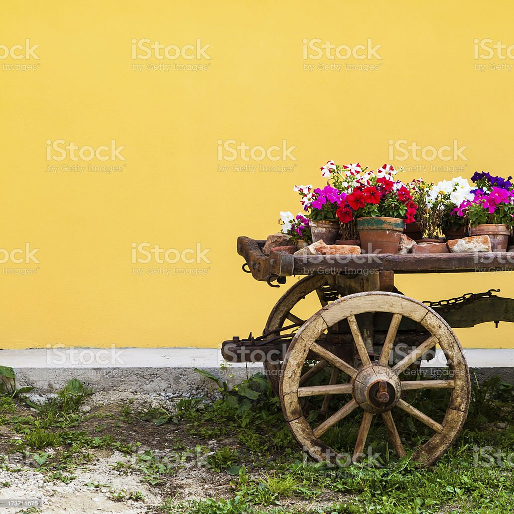 Tuscany flowers royalty-free stock photo