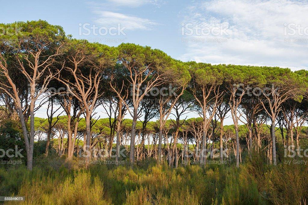 Tuscany forest landscape stock photo