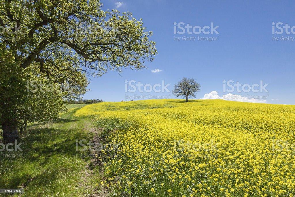 Tuscany hiking trail royalty-free stock photo