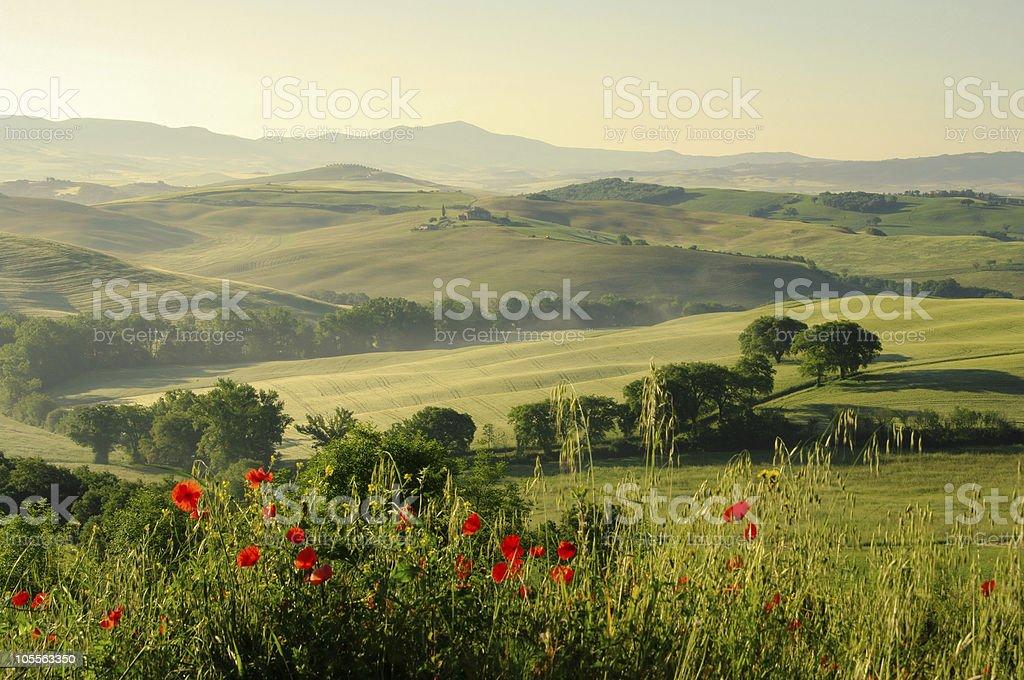 Tuscany hills royalty-free stock photo