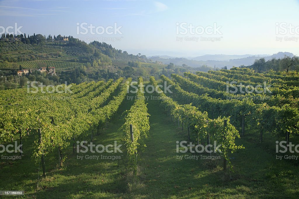 Tuscany Italy And San Gimignano Vineyards royalty-free stock photo