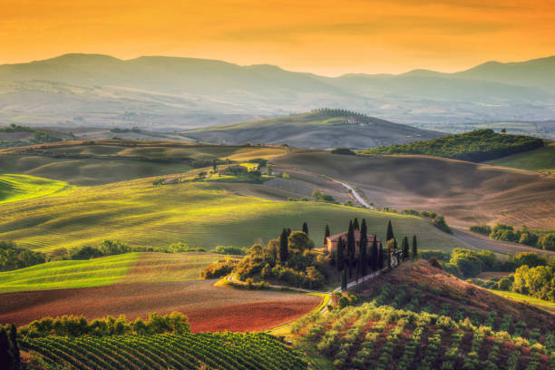 Tuscany landscape at sunrise. Tuscan farm house, vineyard, hills. Tuscany landscape at sunrise. Typical for the region tuscan farm house, hills, vineyard. Italy pienza stock pictures, royalty-free photos & images