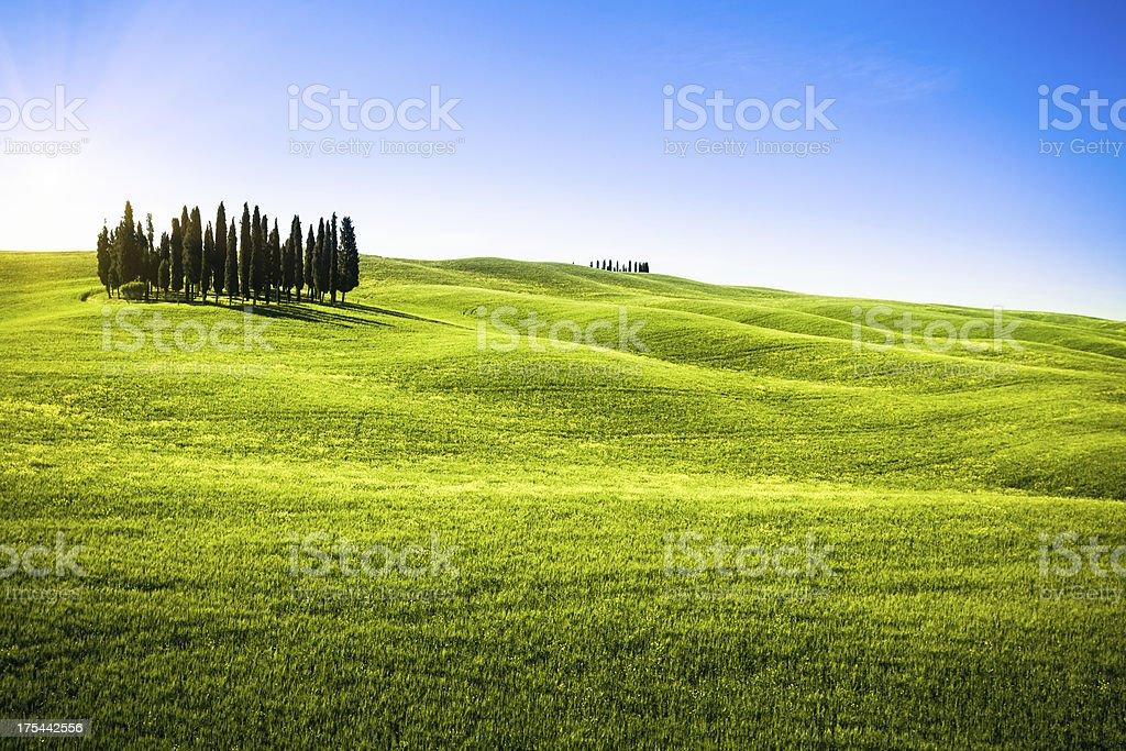Tuscany Landscape in Spring with Cypress Trees, Val d'Orcia royalty-free stock photo