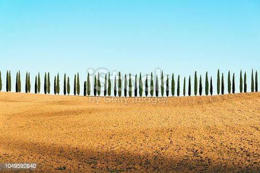 Scenic Tuscany landscape panorama with trees in row