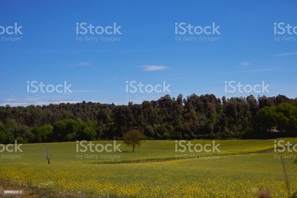 Toskana-Landschaft Lizenzfreies stock-foto