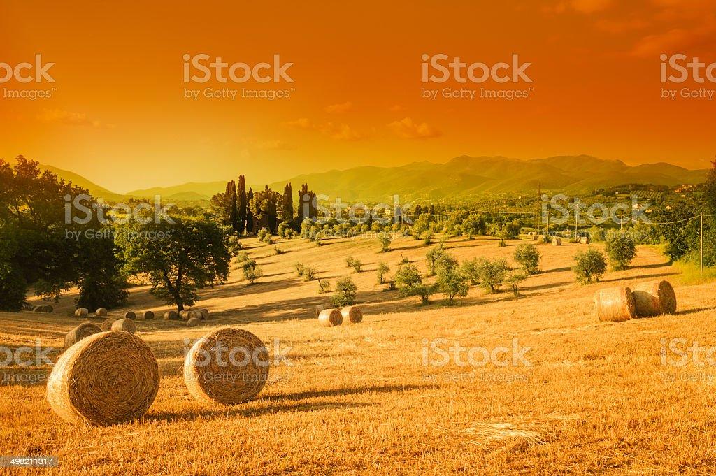 Toscana, paesaggio estivo - foto stock
