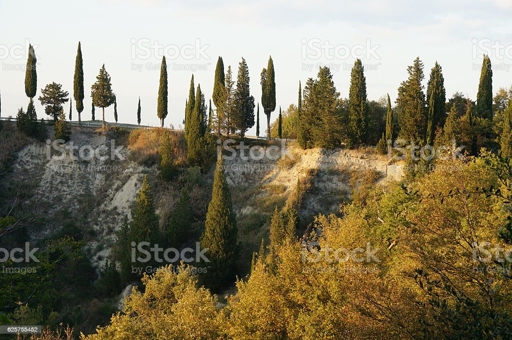 Tuscany landscape with cypresses in a row stock photo
