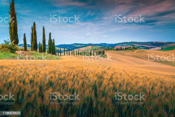 Tuscany landscape with grain fields and curved rural road italy picture id1136325522?b=1&k=6&m=1136325522&s=612x612&h=w30drxqkmqzste6k5io4g8axtstq58dhzcfsfhq2g9y=