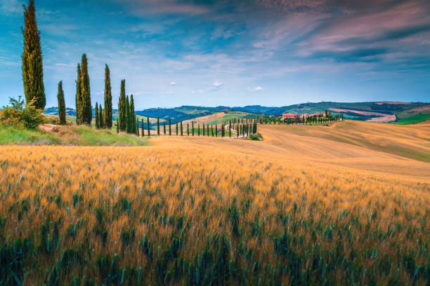 Tuscany landscape with grain fields and curved rural road, Italy stock photo