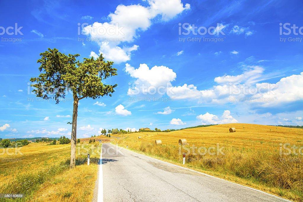 Tuscany, lonely tree and road. Siena, Val d Orcia, Italy. stock photo