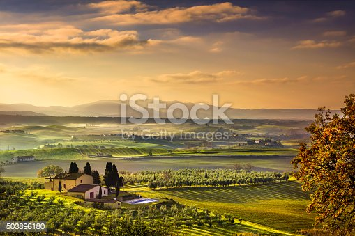 istock Tuscany Maremma foggy morning, farmland and green fields. Italy. 503896180