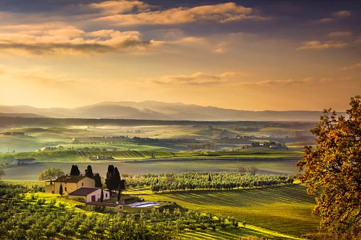 istock Tuscany Maremma foggy morning, farmland and green fields. Italy. 503896180