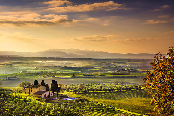 Tuscany Maremma foggy morning, farmland and green fields. Italy. Tuscany Maremma foggy morning, farmland and green fields country landscape. Italy, Europe. florence italy stock pictures, royalty-free photos & images