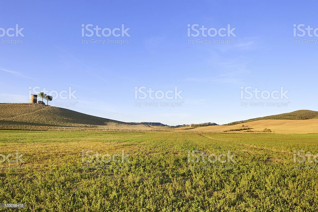 Tuscany, Maremma landscape. Rural tower, green field and trees. stock photo