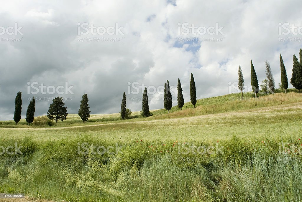 Tuscany typical landscape royalty-free stock photo