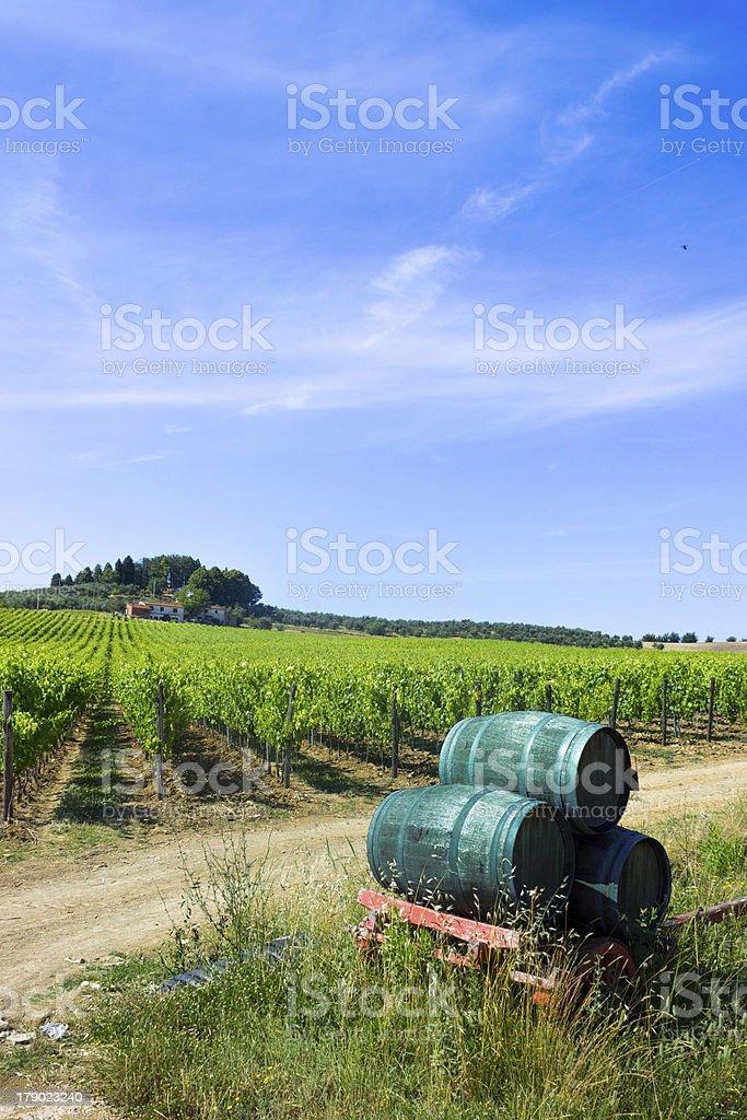 Tuscany Vineyard and wine barrels royalty-free stock photo