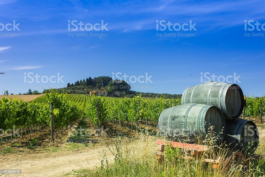 Tuscany Vineyard and Wine Barrels royalty-free stock photo