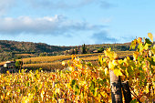 Tuscany vineyards in autumn, Italy
