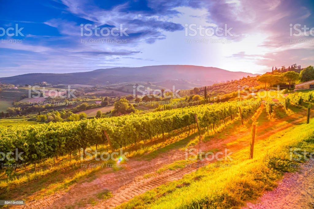 Tuscany vineyards stock photo