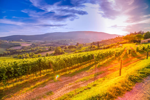 Tuscany vineyards Famous Tuscany vineyards near the Florence in Italy bordeaux stock pictures, royalty-free photos & images