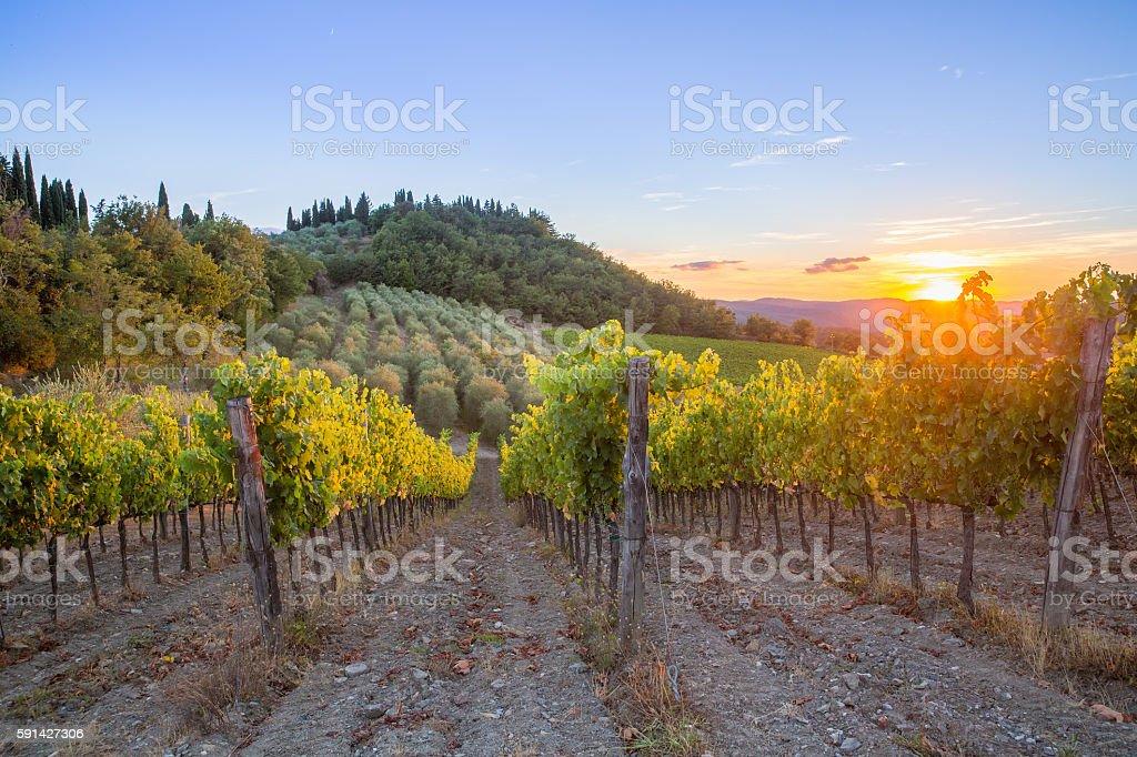Tuscany vineyards sunset stock photo