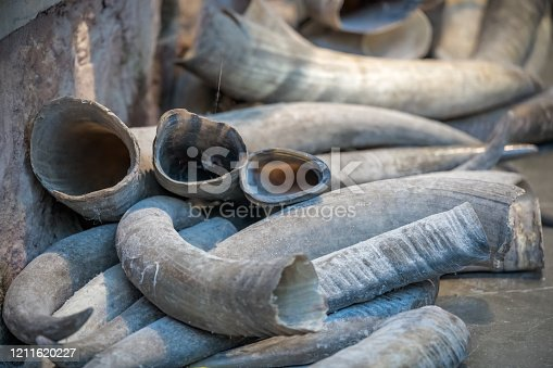 Pile of animal tusks for sale in the local shop in market in the Old town of Fenghuang, Hunan Province, China