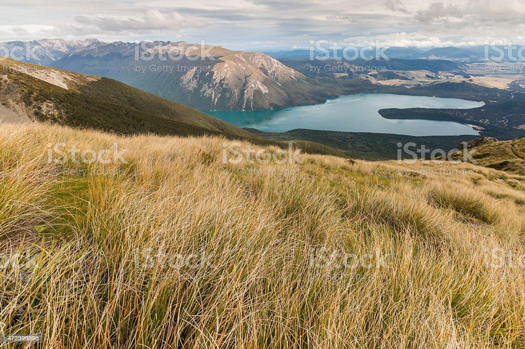 tussock growing on slopes above lake Rotoiti stock photo