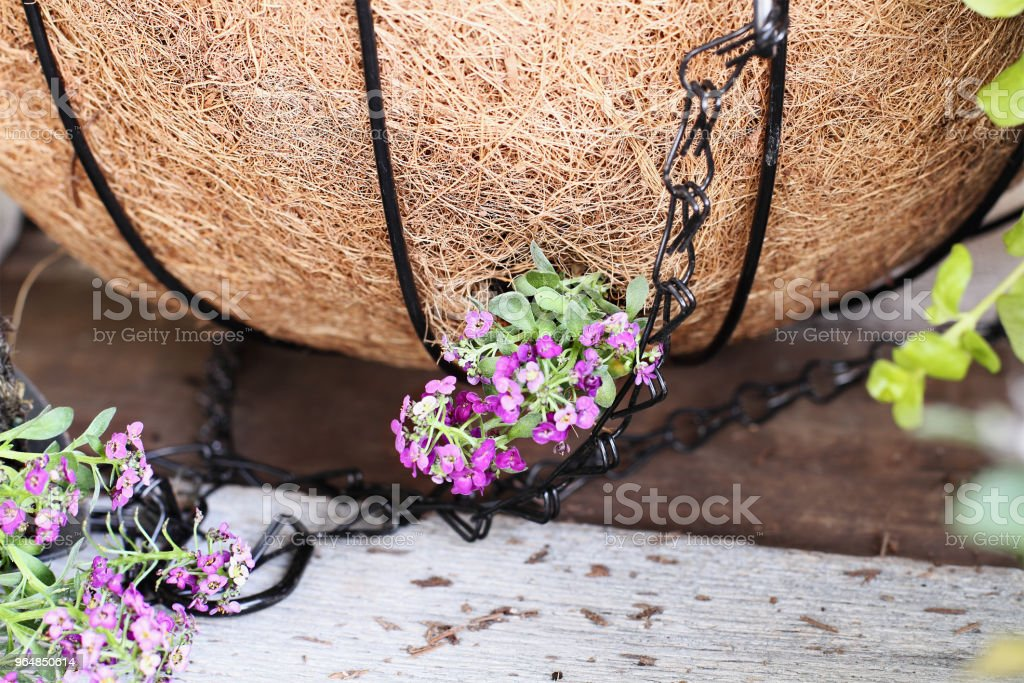 Tutorial on how to plant a hanging basket royalty-free stock photo