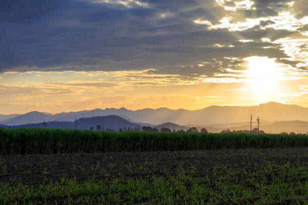 Tweed Valley Sunset Over The Cane Fields stock photo