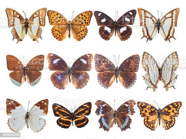 Twelve brushfooted butterfly picture id463630099?b=1&k=6&m=463630099&s=612x612&h=bvyngj3y06wujocdii9dj7a1xvgwska8ayshp5pwaxa=