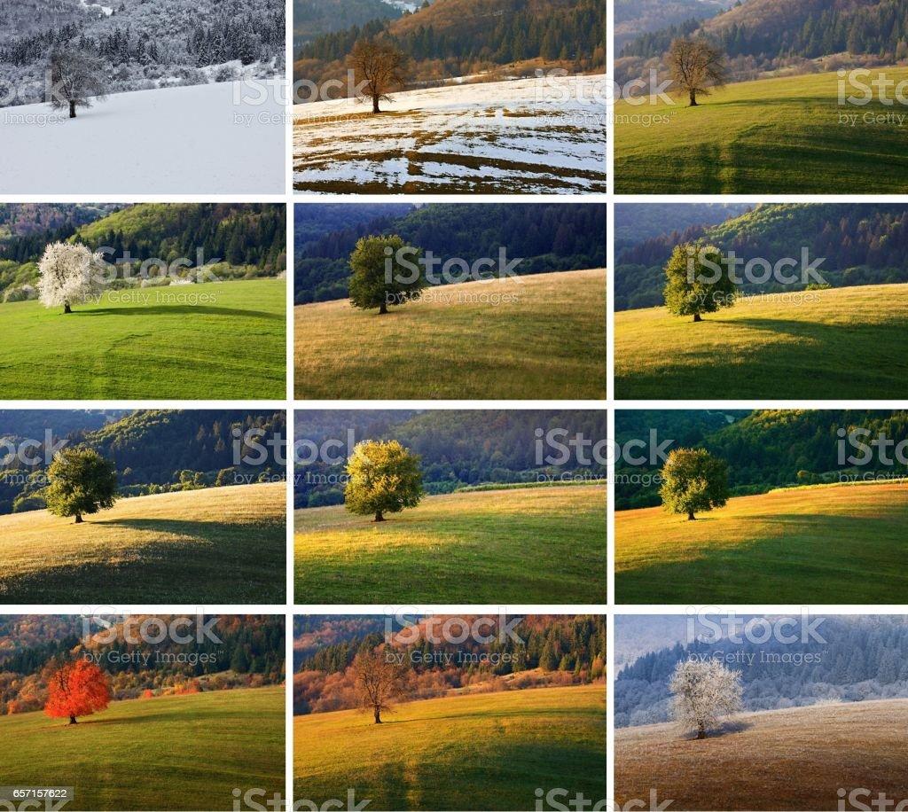 Árvore de cereja doze mês - foto de acervo
