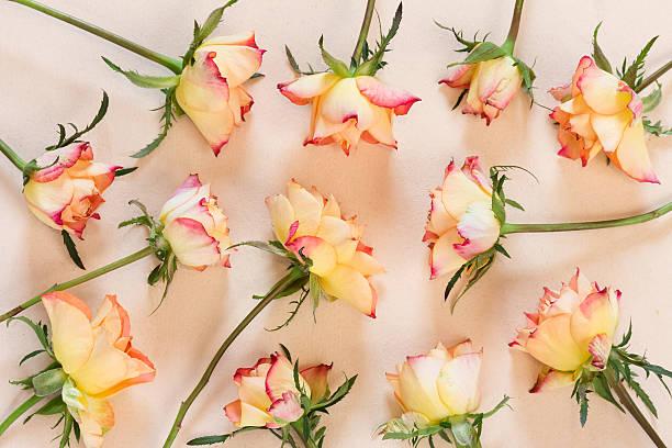 Twelve roses on paper picture id637753346?b=1&k=6&m=637753346&s=612x612&w=0&h=gu1elsibcltpsq0ej7sw26hikxk5kqezin kd4ubtwu=