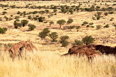 istock Twentyfontein tourist site in Namibia 1265668678