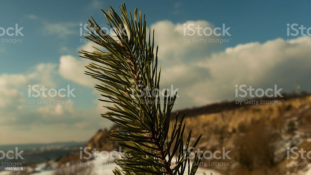 Twig in detail with a quarry covered by snow stock photo