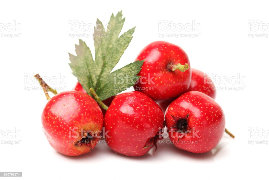 Twig of Hawthorn berries   isolated on white background stock photo