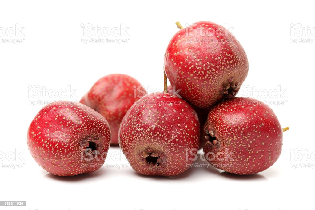Twig of Hawthorn berries stock photo