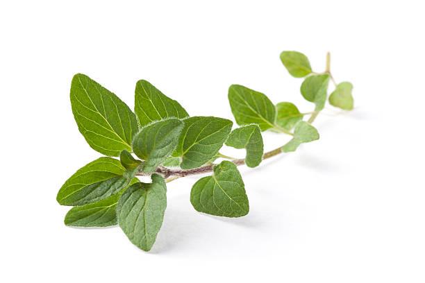 ramita de orgánicos griego en oregano - orégano fotografías e imágenes de stock