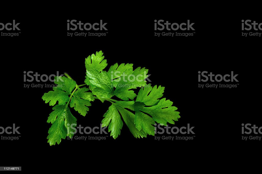 Twig of parslay. stock photo