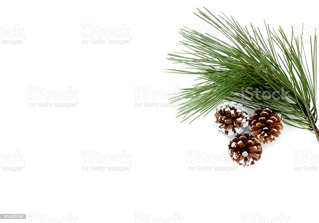 Twig of Pine Tree and Pine Cones – Foto