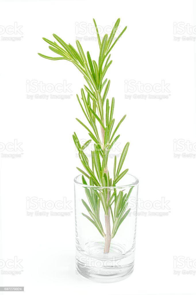 Twig of rosemary in small glass on a white background photo libre de droits